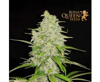 Hulkberry (Royal Queen Seeds) 3 zaden