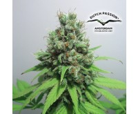 CBD Skunk Haze (Dutch Passion / CBD Crew) 5 zaden