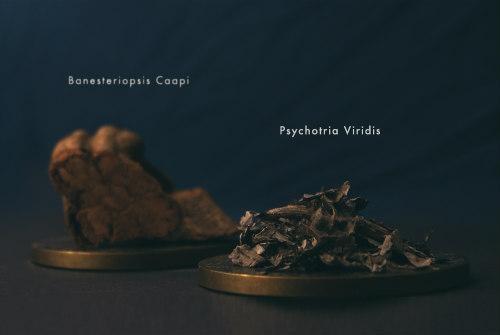 ingrediënten ayahuasca