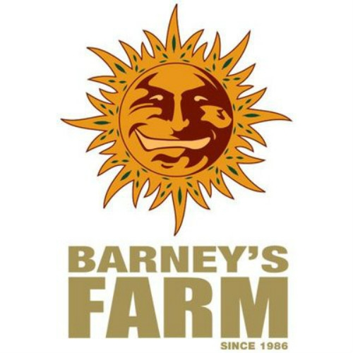Barney's Farm Dutch Headshop