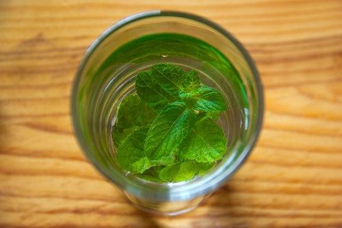 Salvia in water Dutch Headshop